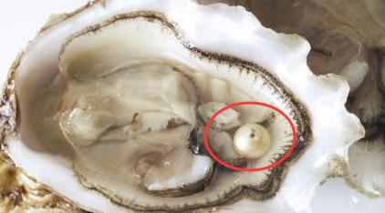 吃生蚝被珍珠硌牙