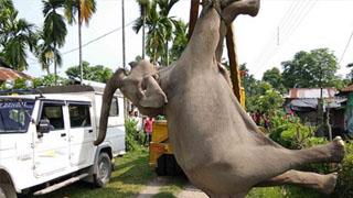印度一大象欲闯稻田