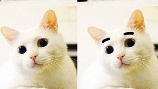 """""""大粗眉""""猫咪成网红"""