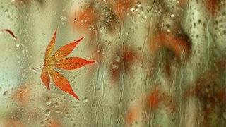 中国北方西南将进入雨季