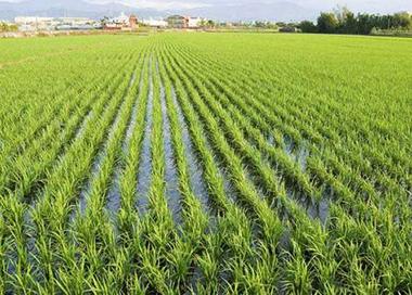 """首个""""海水稻""""寒地育种站设立"""