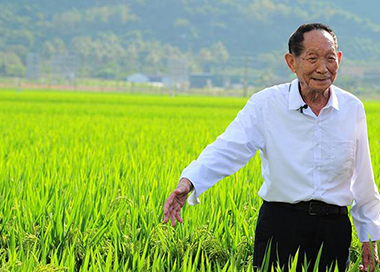 袁隆平:把饭碗掌握在中国人自己手上