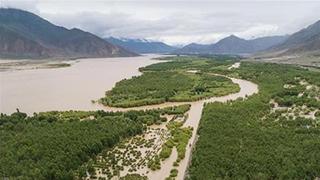 西藏:植树造林