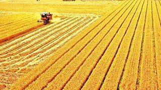 2020年夏粮产量创新高