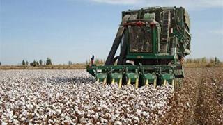 新疆70万亩棉花全面开播