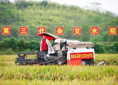 第三代杂交水稻双季亩产再创世界纪录